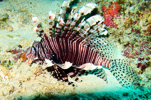 Bunaken Underwater 03