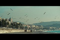 Raid Over Nice (Fabrice Drevon) Tags: sea mountain france beach alpes french fly nice nikon riviera seagull perspective sigma wave shore cote cinematic f28 maritimes negresco 70200mm dazur d700 fabricedrevon