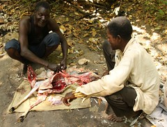 Men skinning a sheep for sacrifice (Raphael Bick) Tags: africa travel burkina fao
