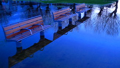 Blue Evening Seats (cycle.nut66) Tags: leica wood blue trees brown reflection water lumix evening flood dusk bare deep panasonic summicron seats benches lx3