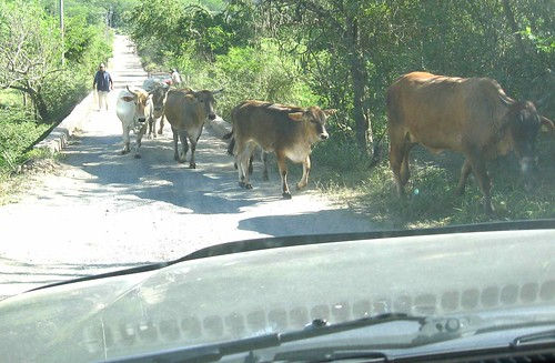 A cowblock in Arroyo Seco