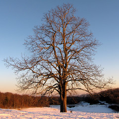 Catching the Last Sunlight (BlueRidgeKitties) Tags: winter tree square landscape march northcarolina landschaft blueridgeparkway lonelytree appalachianmountains westernnorthcarolina southernappalachians ccbyncsa moseshconememorialpark canonpowershotsx10is
