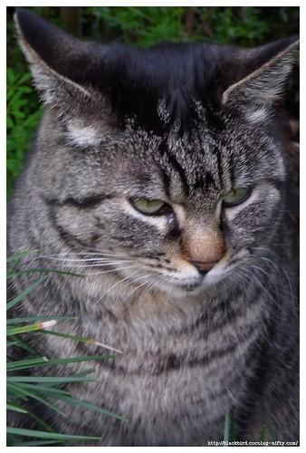 Cat 100310 #03
