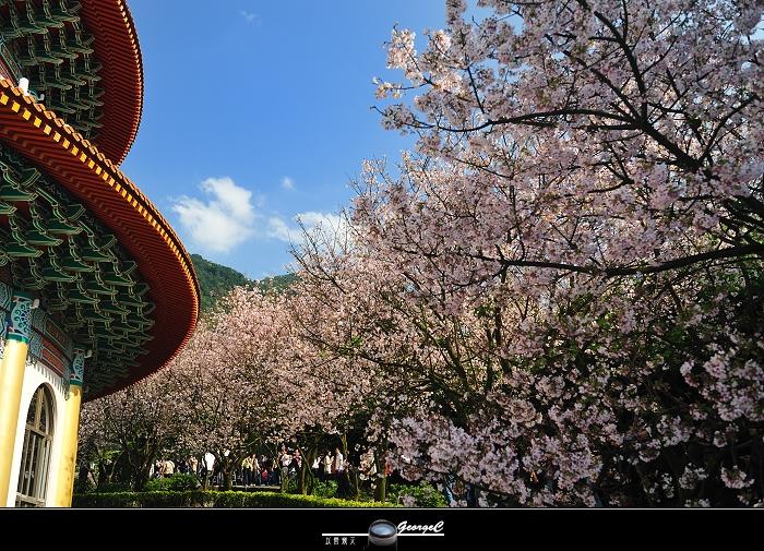 Sakura sunny 14