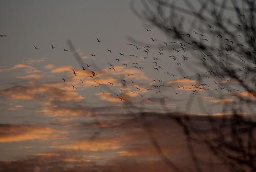 Day #75 - Birds