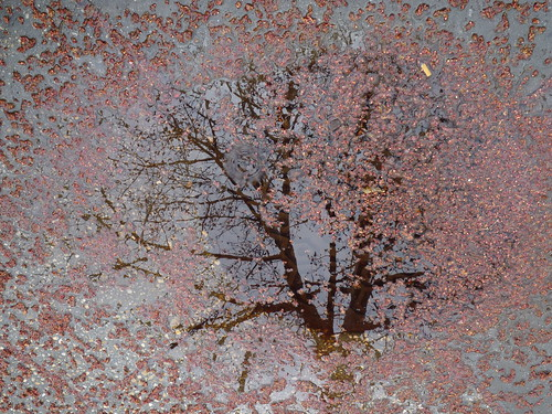 Tree in the puddle