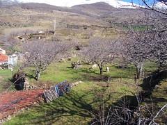 Ruta Cerezo en Flor (Valdo Jerte)