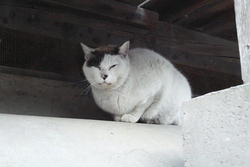 Today's Cat@2010-03-29
