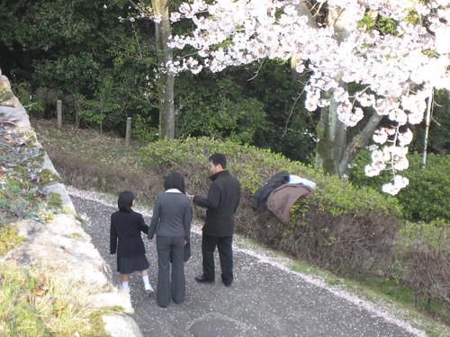 大竹 亀居公園 桜 画像 25