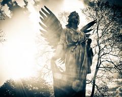[フリー画像] 芸術・アート, 彫刻・彫像, 天使, アメリカ合衆国, 201105102300