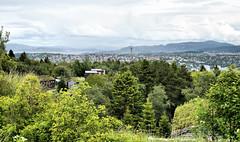 Trondheim in the distance (larigan.) Tags: trees summer panorama town trondheim viewpoint srtrndelag sverresborg trondhjem larigan phamilton turfedroofs gettyimagesnorwayq2 summertimenorway ginordic1