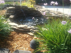 backyard pond (starpants) Tags:
