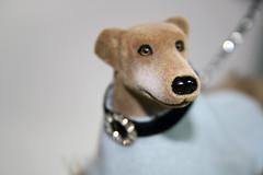 greyhound 09