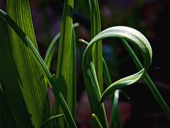 Shared Vision (Karen McQuilkin) Tags: green nature spring hike flowerstems karenmcquilkin sharecvision