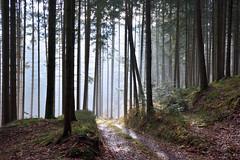 Finally... (sigi-sunshine) Tags: schwarzwald blackforest oppenau wald woods forest licht light germany deutschland badenwürttemberg natur nature gegenlicht wandern hiking wanderweg trail