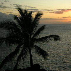 A palm tree silhouette at sunset overlooking the ocean.