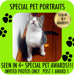SEEN IN 4+ AWARDS SPECIAL PET PORTRAITS