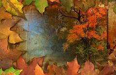 Autumn Manuscript P3