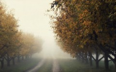 orchard in autumn (OneEyedJax) Tags: road autumn trees mist fall leaves yellow fog wisconsin gold vanishingpoint haze october path trail appleorchard appletrees omot