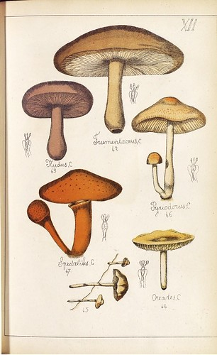 Nudus, Fumentaceus, Pyriodorus, Spectabilis et Oreades spp.