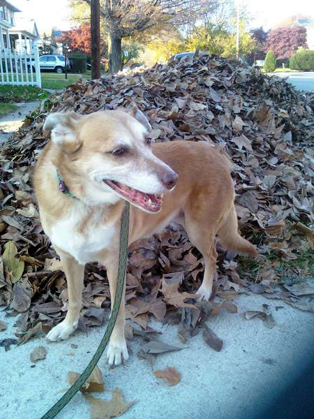 Una with a Leaf Pile (Click to enlarge)