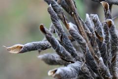seeds15