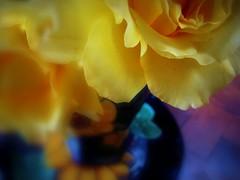 rosy glowsy (msdonnalee) Tags: stilllife blur rose yellow jaune garden flora flor  picasa rosa plate amarillo gelb giallo vase picnik digitaleffects yellowroses  donnacleveland photosbydonnacleveland