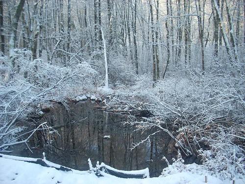 Snowy Sunday 3