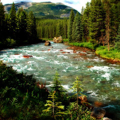 Follow the river (regina_austria) Tags: wood trees nature river banffnationalpark canda blueribbonwinner imagepoetry mywinners anawesomeshot visiongroup flickraward flickrdiamond reginaaustria natureislife goldstaraward flickrestrellas mallmixstaraward