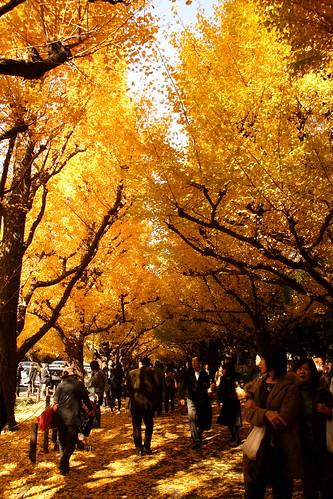 明治神宮外苑銀杏並木