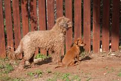 Buba and Shanty (Danielme) Tags: dog shanty buba