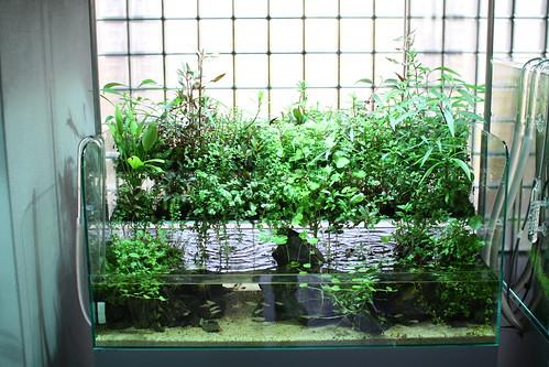 ADA aquarium gallery40