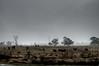 Australian snowstorm with surreal cows (nosha) Tags: beauty nikon july australia bluemountains f56 pm 2008 lightroom d300 blackmagic 18200mm 160sec 31mm nosha nikond300 australia2008 160secatf56