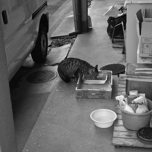 Today's Cat@2010-01-08