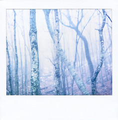 (violetjulia) Tags: trees winter green nature rain fog forest landscape polaroid sticks branches january blues whites trunks spectra expired 2010