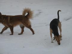 Headless Suzee, Whole Frito (jnoc) Tags: snow montague montagueplains