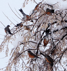 (suenosdeuomi) Tags: winter snow birds olympusstylus 10xzoom klamauk