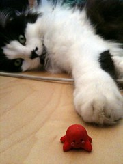 Cat vs. Octopus (fatseth) Tags: david macro cute cat toy fight funny chat play lol fimo squid octopus cuteness goliath versus iphone pieuvre poulpe lolcat junglelaw