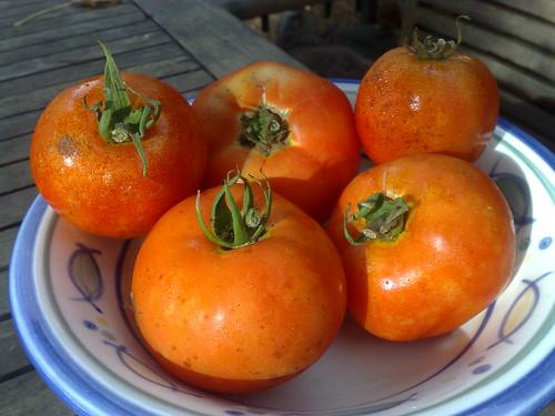 Tom's tomatoes