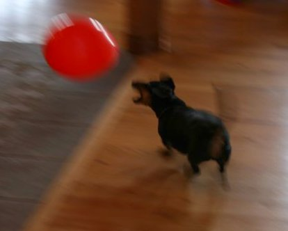 Oscar & Balloon