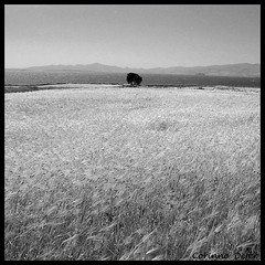 """Seul"" - ""Alone"" (Corinne DEFER - DoubleCo) Tags: travel blackandwhite bw tree blancoynegro nature contrast square island landscapes alone noiretblanc nb greece rbol contraste  paysage albero arbre paesaggi baum cadre cyclades grece antiparos  paisagens carr seul bl memoriesbook platinumheartawards carrfranais corinnedefer corinnesaglier ilegreque updatecollection"