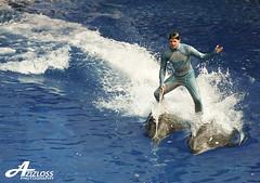 brbrbrm brbrbrbm rerara rara.. (ZiZLoSs) Tags: show usa macro canon eos orlando florida dolphin usm seaworld f28 aziz ef100mmf28macrousm abdulaziz  ef100mm 450d zizloss  3aziz almanie