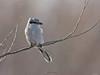 oiseau (original)