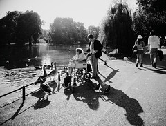 Simple pleasures (Ian Brumpton) Tags: park street blackandwhite bw london geese twilight noiretblanc candid wheelchair streetphotography monotone monochromatic parklife simplepleasures agranddayout blackwhitephotos londonstreetphotography lifepassingby blackwhiteheartbeats