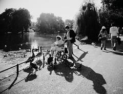 Simple pleasures (Ian Brumpton) Tags: park street blackandwhite bw london geese twilight noiretblanc candid wheelchair streetphotography monotone monochromatic parklife simplepleasures agranddayout blackwhitephotos londonstreetphotography lifepassingby blackwhiteheartbeats