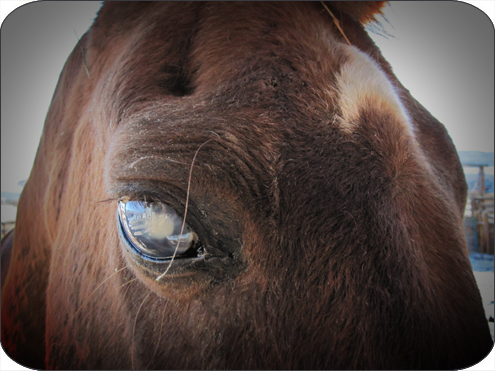 houdini's eye