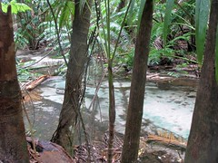 Silent Sand Creek