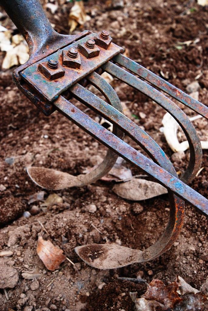 A rusty hand tiller in a garden.