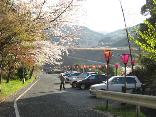 大竹 亀居公園 桜 画像 5