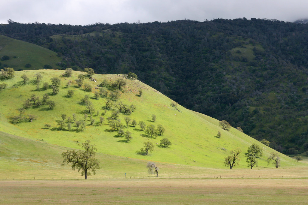 oak_hillside